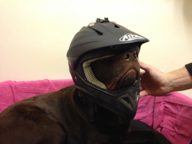 Blue wearing a motor cross helmet