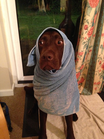 Blue wrapped in a towel