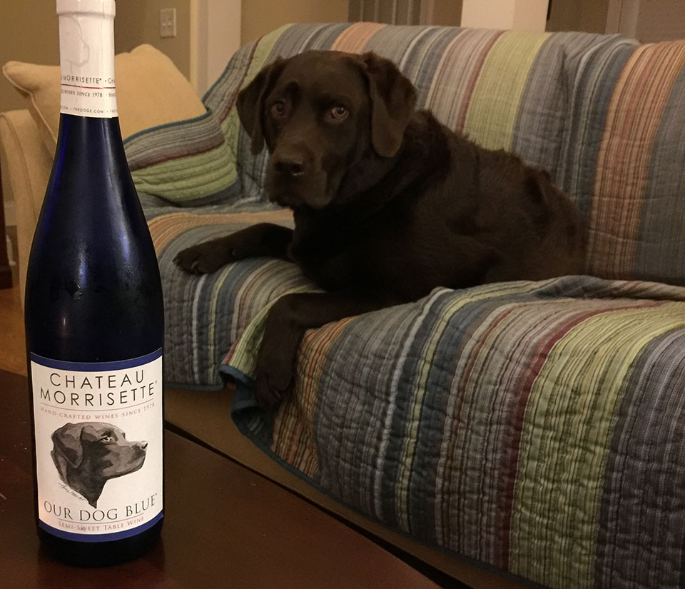 Blue with wine called 'Our Dog Blue'