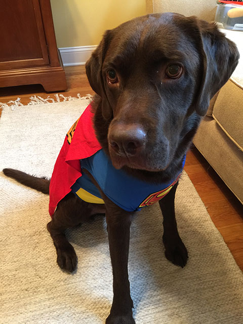 Blue dressed in superman outfit