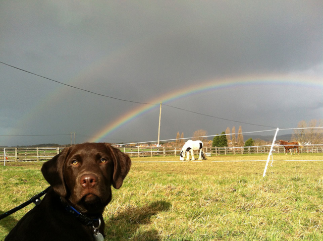 Blue in field with rainbow
